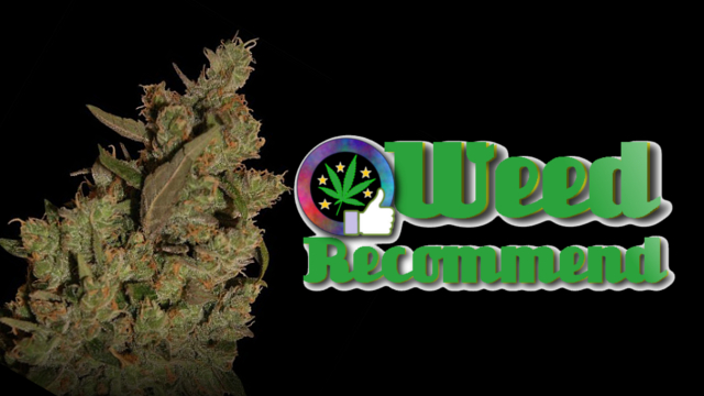 CBD Critical Cure – Recommended Cannabis Seed Strain