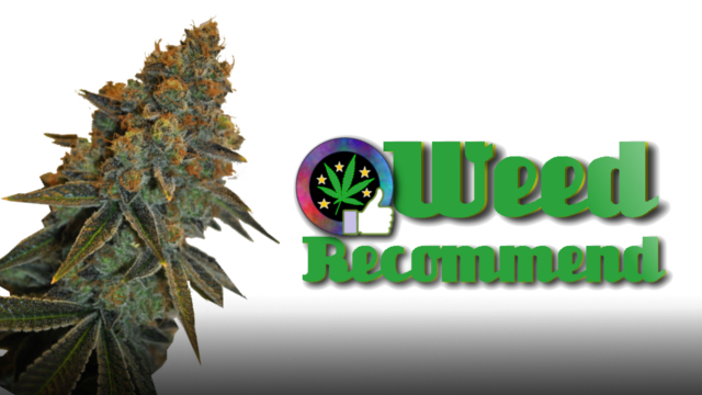 CBD D Diesel – Recommended Cannabis Seed Strain