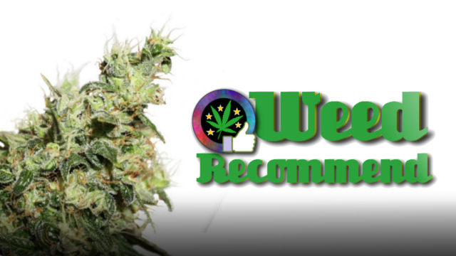 CBD Kush - Recommended High CBD cannabis seed strain - Weed Recommend