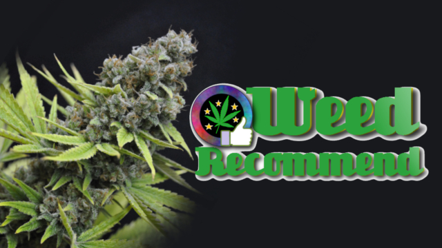 CBD Shark cannabis seed strain recommended - Weed Recommend