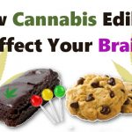 Cannabis Edibles On The Brain - Weed Recommend