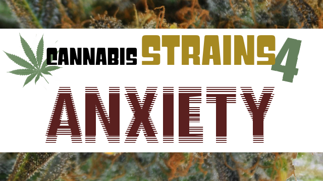 Cannabis Strains For Anxiety