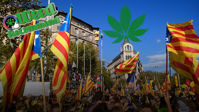Setting Up Cannabis Social Clubs – Advice from Catalonia