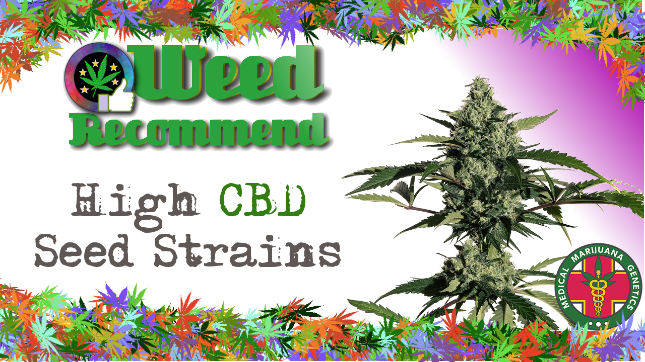"""The Highest CBD Count We Have Seen"" – 5 new CBD Dominant Seed Strains"