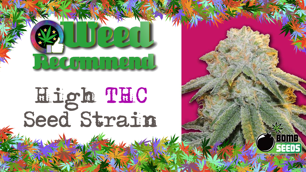 High THC Seed Strain: Bubble Bomb