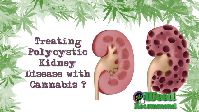 Treating Polycystic Kidney Disease with Cannabis