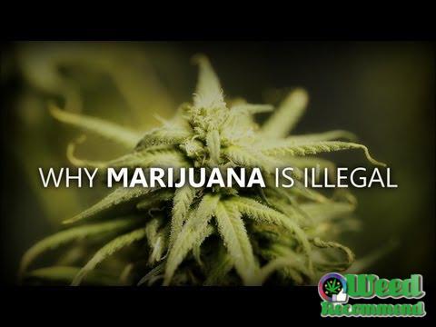 Why Marijuana is illegal ? – Epic Joe Rogan Rant