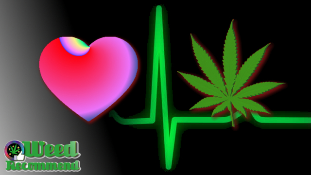 Cannabis Could Cure Organ Transplant Rejection