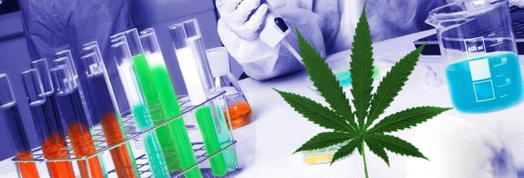 More Studies Back Marijuana Than Pharmacy Drugs