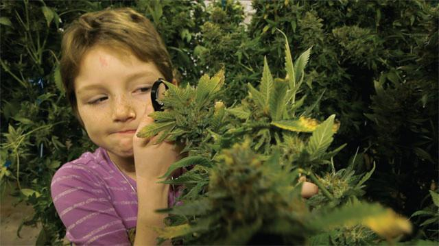Stoned Kids: Giving Cannabis To Children ?